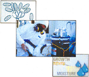 Mould removal, mould spores,Growth, Moisture